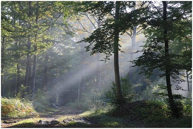 Les chants de l'aube (Pascale Seys)