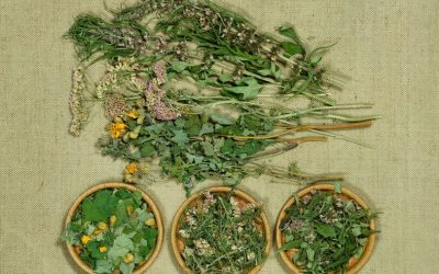 Phytothérapie, les meilleures plantes pour l'immunité